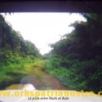 Congo 65 - la piste ... entre Paulis et Buta